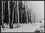 Bosque-bosque.jpg