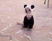 Fotos Graciosas divertidas con Humor-perrito.jpg