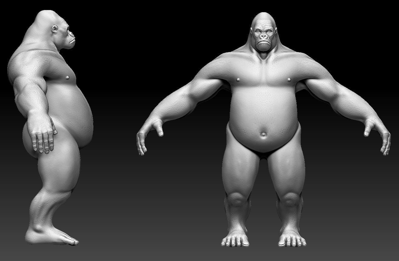 Increíble Anatomía Del Gorila Friso - Anatomía de Las Imágenesdel ...