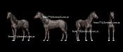 horse caballo-horse-caballo.jpg
