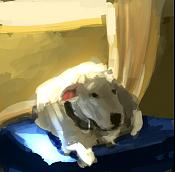 Ejercicios de iluminacion-perro01.png