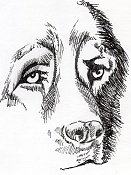 kouprey dibus-boceto011.jpg