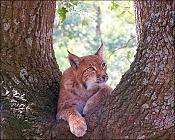 Fauna-100_3021.jpg