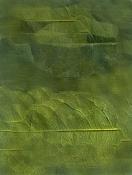 La Casa de Julieta-textura-vegetal.jpg