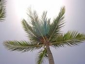 Fotos Naturaleza-palmera.jpg