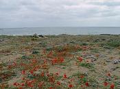Fotos Naturaleza-playa2.jpg