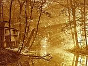 Practicas  Intentando mejorar -bosque_casa.jpg