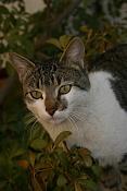 Fauna-gato.jpg