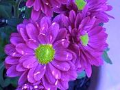 Flora-100_0842.jpg