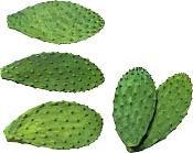 Reto semanal de modelado-cactus_png3816.png