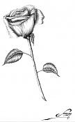 Rosa para Jennifer-rosa_jennifer_f3d.jpg