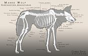 Práctica animales-Lobo-maned_wolf_anatomy.png