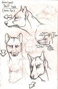 Práctica animales-Lobo-wolf-furless_head.jpg