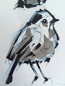 Birds sketches-bird01.jpg