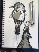 Birds sketches-bird04.jpg