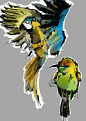 Birds sketches-birds01.jpg