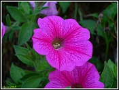Flora-flor_rosa.jpg