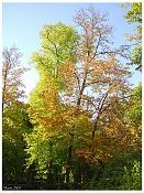 Flora-arboles_aranj.jpg