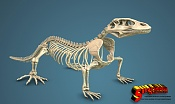 Komodo dragon skeleton by sergio mengual-komodo-fin-logo2.jpg