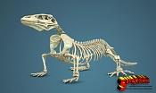 Komodo Dragon Skeleton By Sergio Mengual-komodo-fin-lolo1.jpg