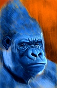 Dibujos y bocetos-gorilla.jpg