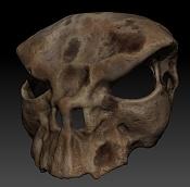 Anatomia-skullbelt.jpg