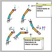 Rig de clavicula independiente y dependiente de brazo-rig-clavicula.jpg