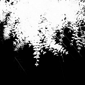 Enrredadera-vigne_2_alpha.jpg