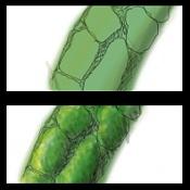 Dragoon Verde-dragon.jpg