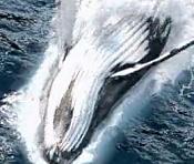 I speak whale Houdini project-i-speak-whale.jpg