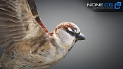 Bird Animated (sparrow)-sparrow-02.jpg