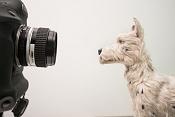 Isla de perros en Stop Motion-la_isla_de_los_perros_12.jpg