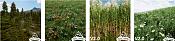 Unreal Engine pone en descarga modelos de plantas-unreal_engine_plants.png