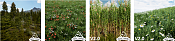 Modelos gratuitos para utilizar en Unreal Engine-unreal_engine_plants.png
