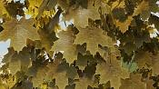 Modelar y animar enredadera-ivy-maya-vray-final-mayatubers-leaf-yellow.jpg