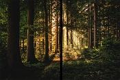 Tutorial Photoshop rayos de luz-tutorial-photoshop-efecto-rayos-luz-bosque.jpg