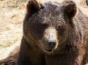 Fauna-oso.jpg