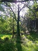Fotos Naturaleza-bosque.jpg