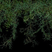 Busco un tipo de planta especifico   -vigne_1.jpg