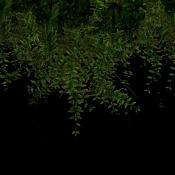 Busco un tipo de planta especifico   -vigne_2.jpg