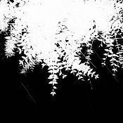 Busco un tipo de planta especifico   -vigne_2_alpha.jpg