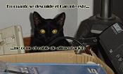 Mi gata es una boicoteadora  -gataforo.jpg
