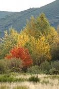 Fotos Naturaleza-img7361_p1.jpg