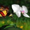 Borboletas E Orquidea-orquidea.mini.jpg