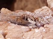Fotos Naturaleza-almeria-2-.jpg