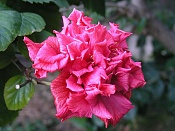 Flora-p1190251.jpg