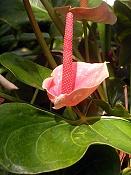 Flora-dscn7954.jpg