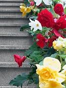 Flora-dscn5319.jpg