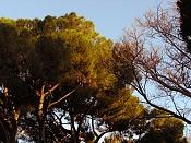 Fotos Naturaleza-p1190248.jpg