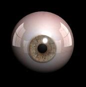 Una cabeza guapa-ojo3.jpg